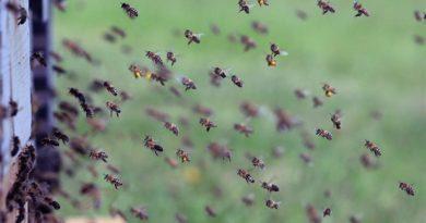 Bienensterben Brexit