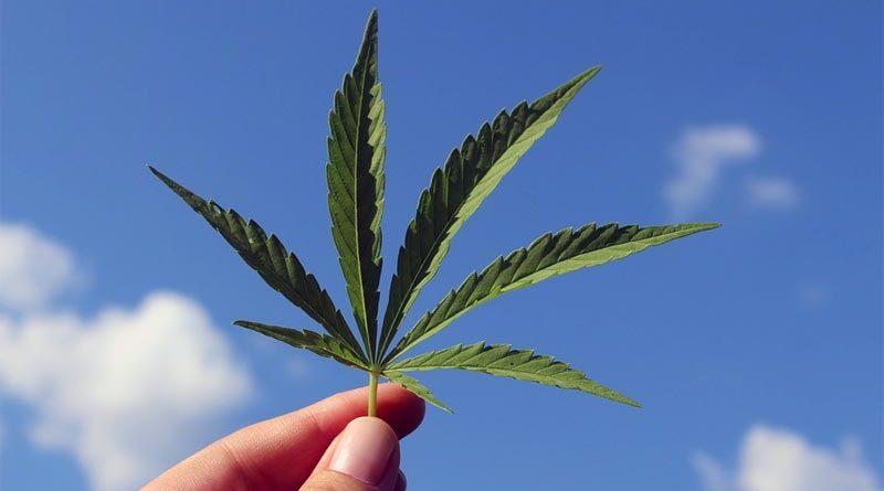 Cannabis Legalisierung Island