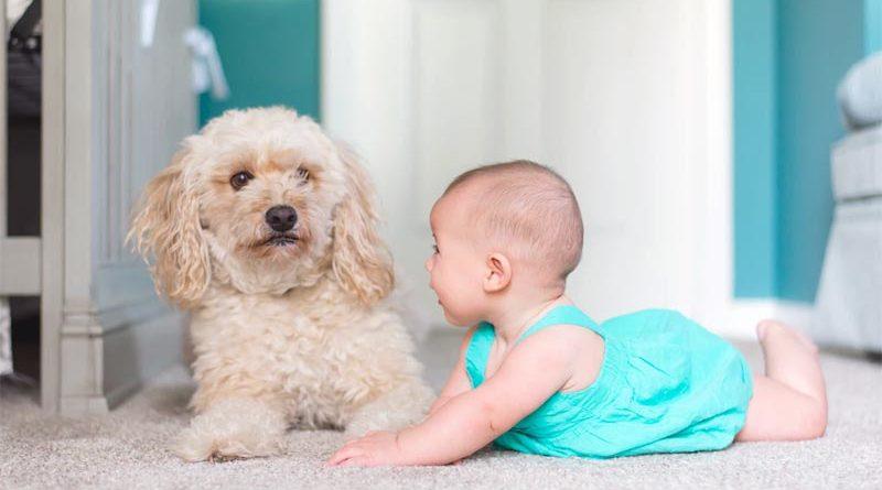 Hunde Babys Finnland