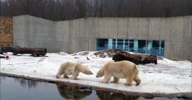 Tallinn Zoo Eisbären