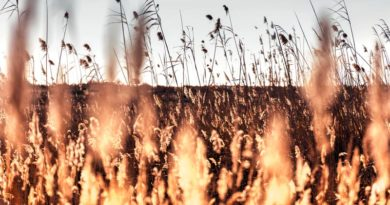 Lettland: Mit dem Frühlingswetter kamen die Brände