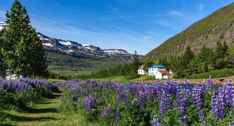 Island Klimawandel Wärmerekord