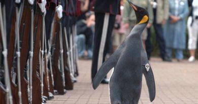 Pinguin Nils Olaf III.