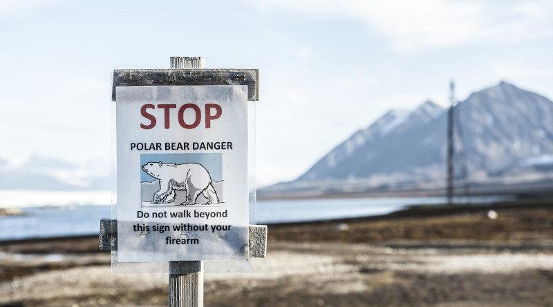 eisbaer warnung spitzbergen