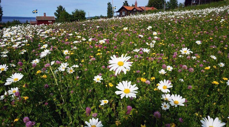 Tällberg Reiseziele Schweden