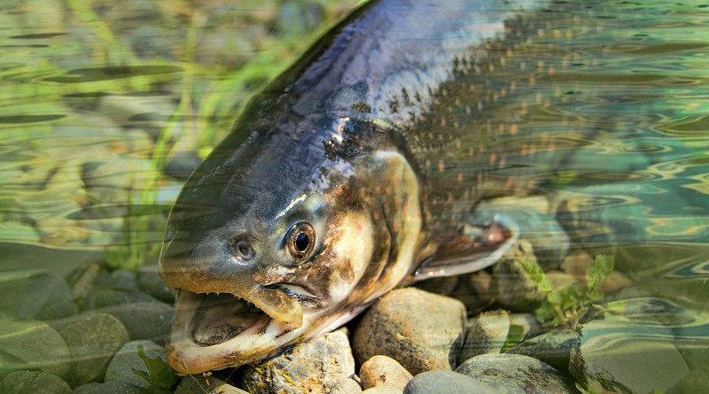fisch norwegen