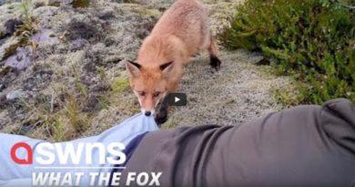 Fuchs Lofoten Video