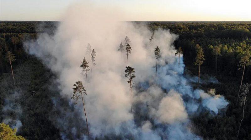 Waldbrand Pärnu