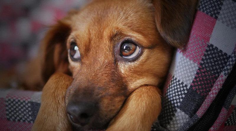 uk hundewelpen schutz