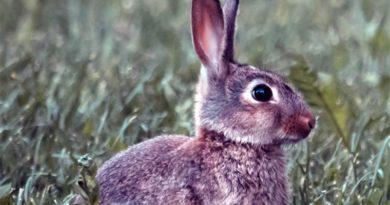 Kaninchen Helsinki