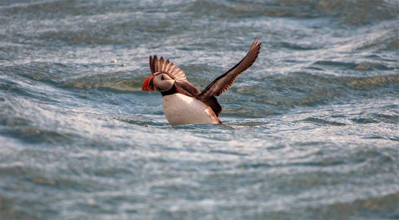 Seevögel Schottland